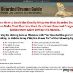The Bearded Dragon Information » The right way to Look after Bearded Dragons