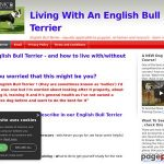 English Bull Terrier | Methods to stay with an English Bull Terrier, Puppies To Grownup !